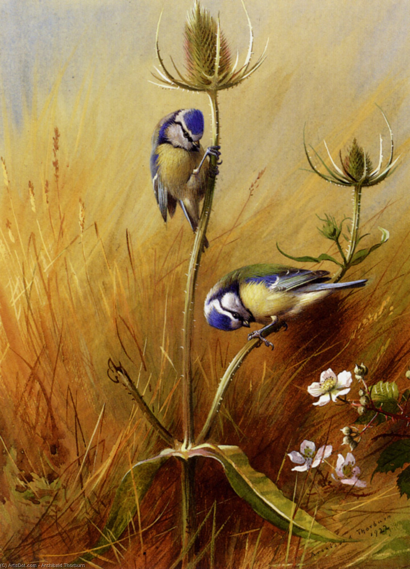 オニナベナでBluetits, 水彩画 バイ Archibald Thorburn (1860-1935, United Kingdom)