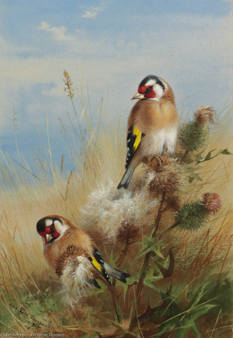 あざみのうちGoldfinches, 水彩画 バイ Archibald Thorburn (1860-1935, United Kingdom)