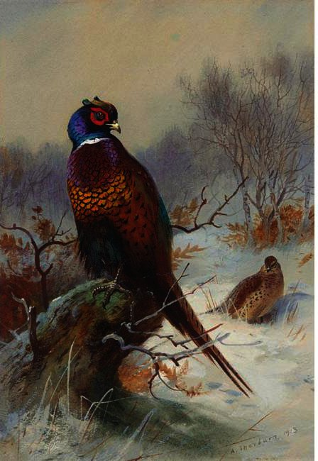 キジ1対, 水彩画 バイ Archibald Thorburn (1860-1935, United Kingdom)