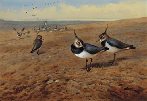Lapwings, 水彩画 バイ Archibald Thorburn (1860-1935, United Kingdom)